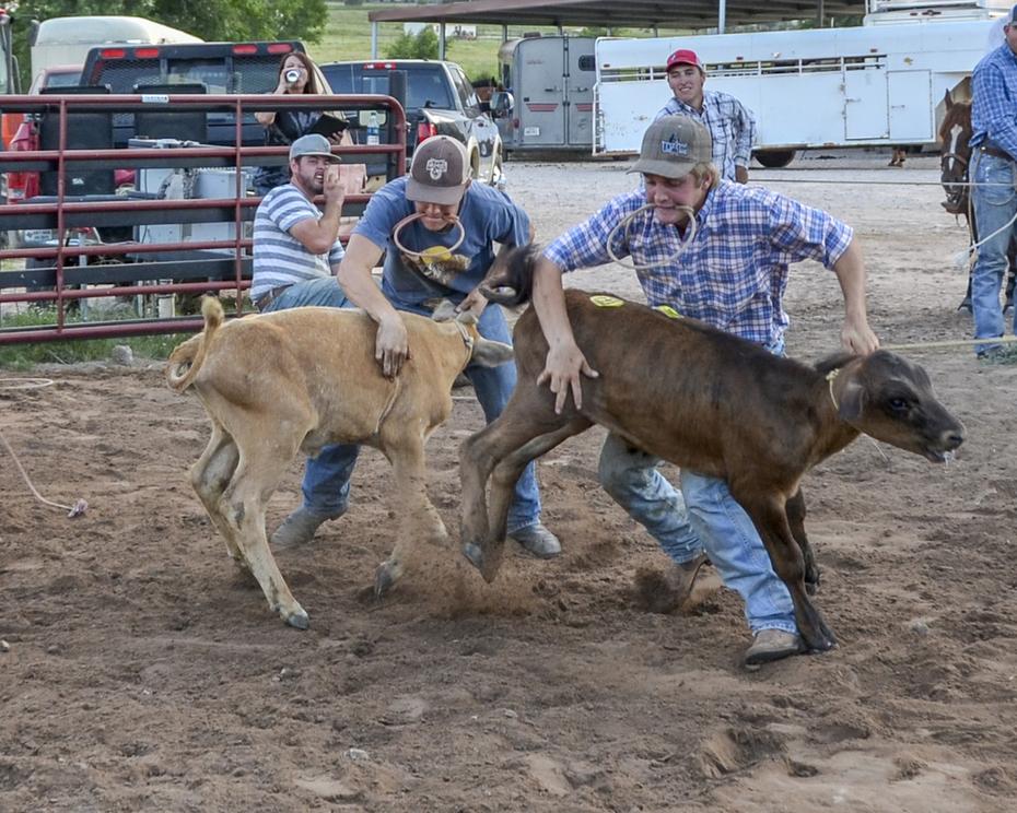 Waynes Calf Round Up