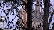 Etourneaux devant la cathédrale de quimper