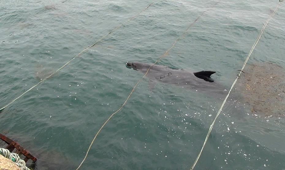 Randy, dauphin dans la baie de Lampaul, Ouessant