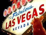 Fabulous Las Vegas Corgis