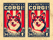 South Texas Corgis