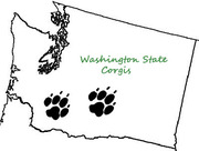 Washington State Corgis