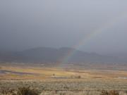 Northern Nevada Corgis
