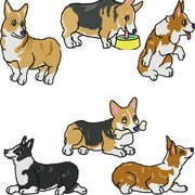 Seattle Corgis