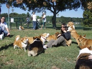 The Tampa Bay Area Corgi Meetup Group