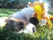 Puppies 2010