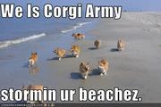 Military Corgis!