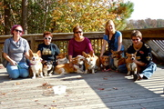 Corgis of Virginia Beach