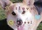 Corgis With A Youtube *W…