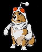 Corgis of Reddit