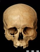 Physical and Forensic Anthropology