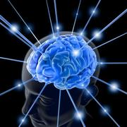 Neuroanthropology and Cognitive Evolution