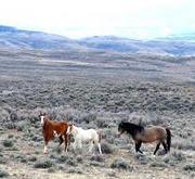 Save America's Wild Horses