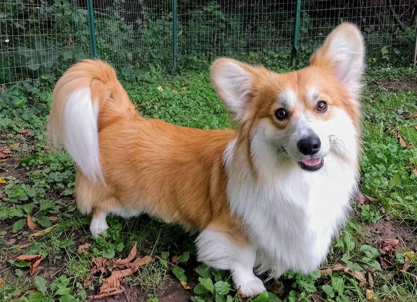 Can T Believe Docking Is Still Legal In The Us Mycorgi Com