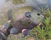 Ooops! Same fish!
