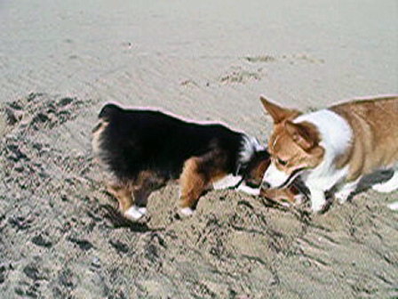 Handsome George`s 1st Visit to the beach