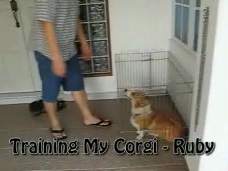 Training Ruby the Corgi