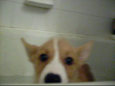 Peek-a-boo bath time