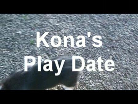 Kona's Play Date