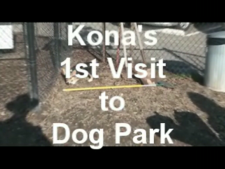 Kona's 1st Visit to the Dog Park