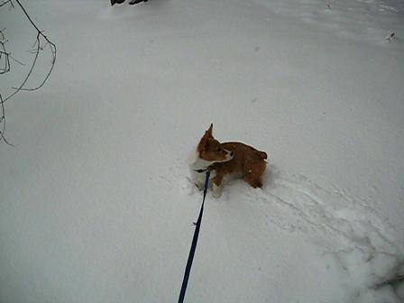 Porgy in Snow