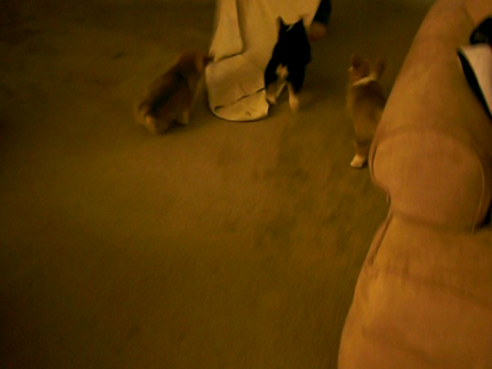 J.D. Turk and Mily towel chasing