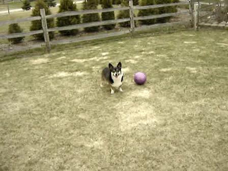 Riley and Sadie having a ball