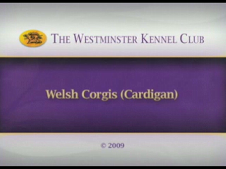 westminster 09 Cardigan