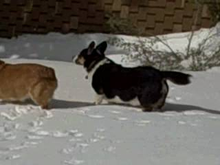 Griffey and Charlie Play in the Snow