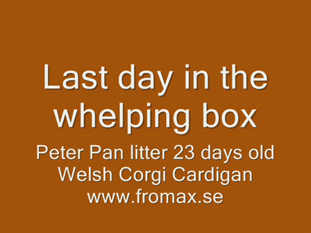 Last day in whelping box