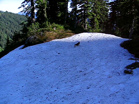 Mountain snow frap!