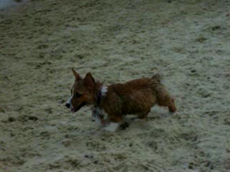 kato at the beach