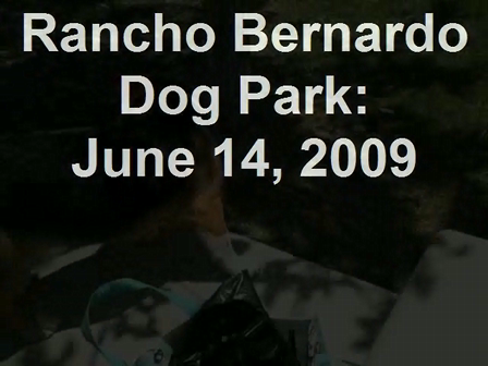 Rancho Bernardo Dog Park June 14, 2009