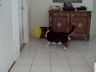 Griffey and Charlie and the Yellow Balloon