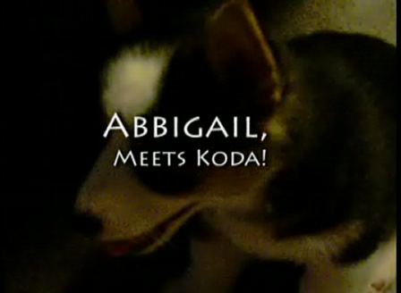 AbbiKoda01