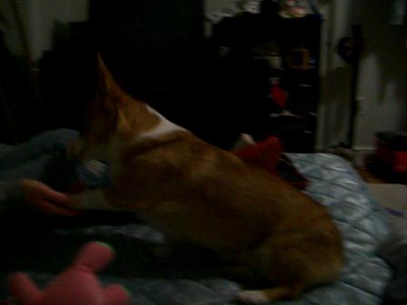 Lola doing tricks while I'm doing laundry lol