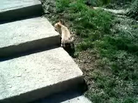 Mav as puppy outside