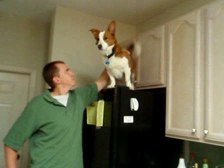Don't let your friends put your dog on the fridge