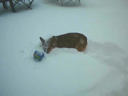 Yardley Snow Dog