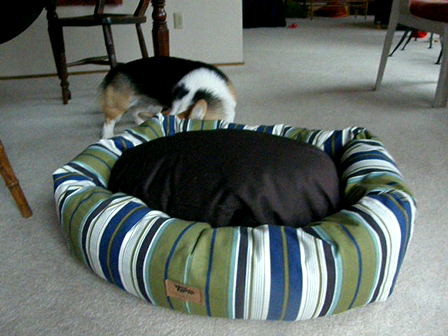 New Bed/Toy