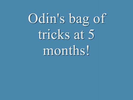 Odins bag of tricks 5 months