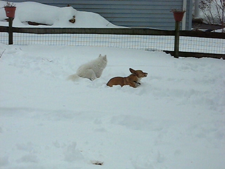 playing in the big snow Feb 2010 002