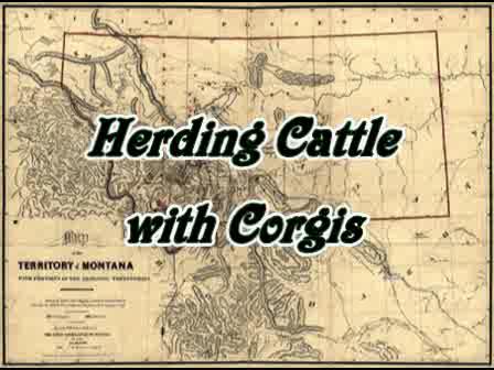 Montana Corgis