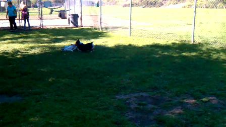Ella chasing Sadie