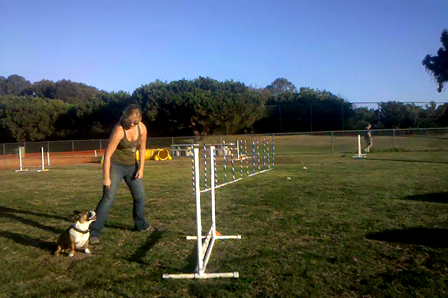 Shelly at the Agility Demo !