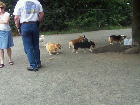 August Corgi Meet Up #3