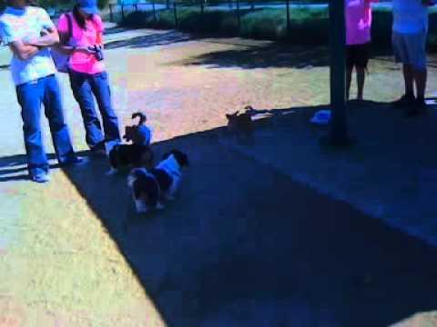 Bowser at Shoreline Dog Park 1st Time