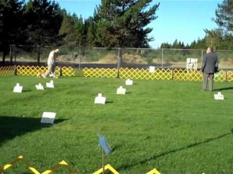 Gig Harbor Kennel Club 2010 - Rally O