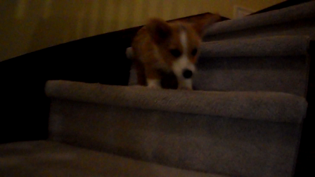 Journey To the Bottom of the stairs