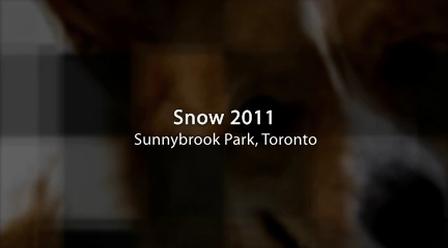 Snow + Corgi = :)